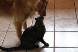 Cooper Kissing Pete