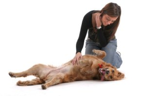 dog-massage