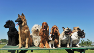 Group-of-dogs-resized-600