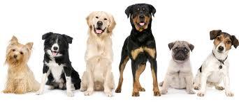 Many dogs
