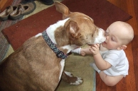 baby with pit bull