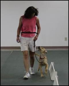 Cooper Clicker Training Heel