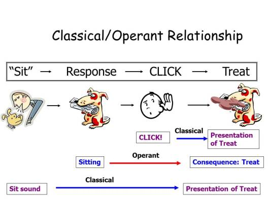 Operant and Classical Connection 2