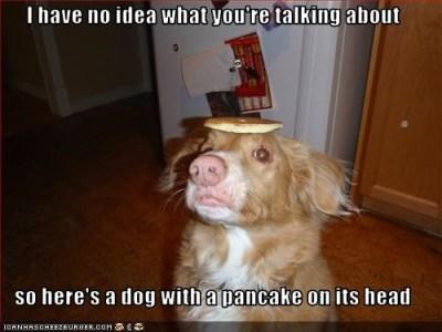 pancake dog