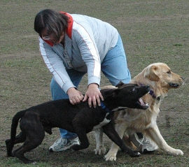 dog park aggression