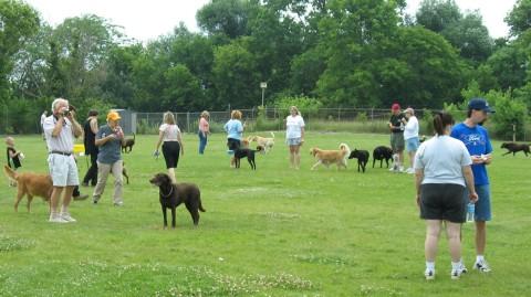 Dog Park People