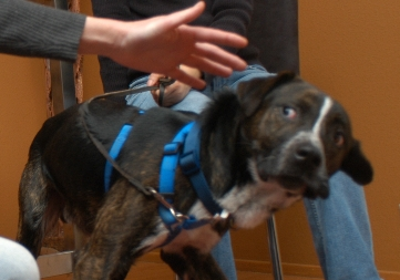 how to stop fear aggression towards other dogs
