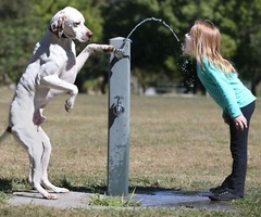 Helping Dog