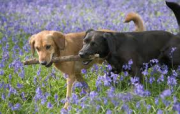 sharing stick