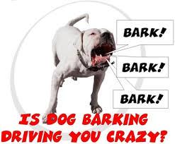 Crazy Barking