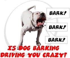 Crazy Barking
