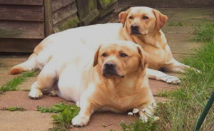 Two Fat Labs