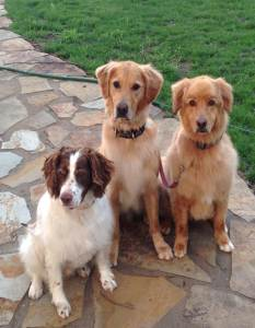 Vinny, Cooper and Chip