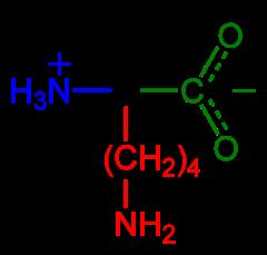 Lysine-zwitterion-2D