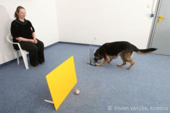 Barrier Fetch Study