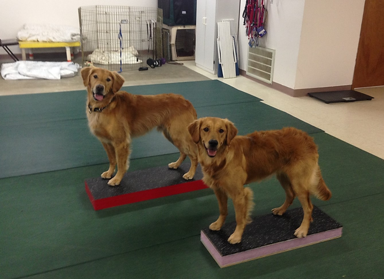 Training Platforms For Dogs Uk