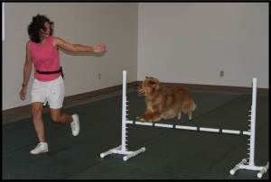 Chip Agility Jumping