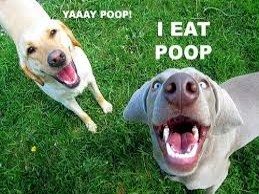 We Eat Poop
