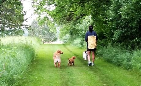 Linda Cooper Vinny Ally Walking