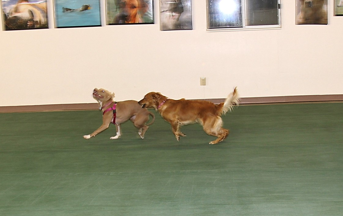 canine nutrition the science dog colbie and ally chase