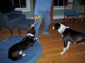 tug-of-war-with-person